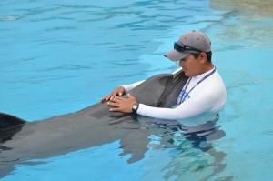 Entrenador de Delfines