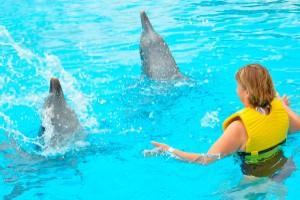 5 Datos interesantes sobre los delfines nariz de botella muy inteligentes