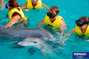 Best Places for Dolphin Swims in the Riviera Maya Cancun