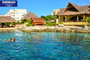 Best Places for Dolphin Swims in the Riviera Maya Cozumel