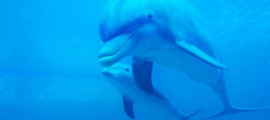 5 curiosidades sobre el comportamiento de los delfines