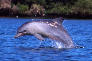 9 Incredible types of dolphins in mexico Bottlenose