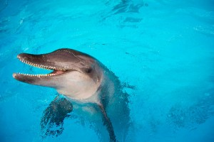 9 Incredible types of dolphins in mexico Rough-toothed Dolphin