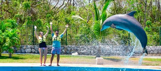 Entrenador por un día en Dolphinaris Riviera-Maya