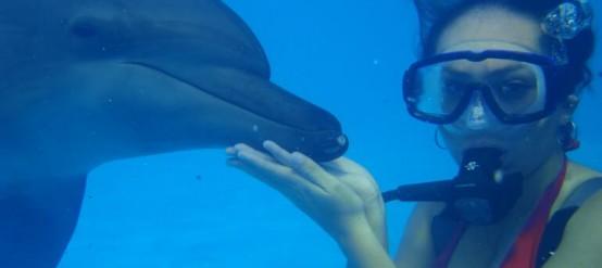 Disfruta del nado con delfines en Cancún