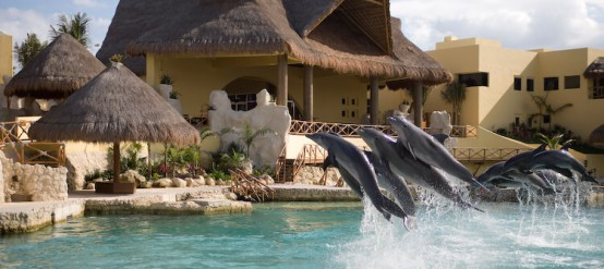Swimming with dolphins at Dolphinaris facilities in Cozumel
