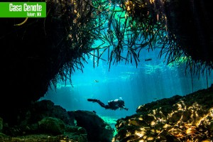 What to see in the Riviera Maya Casa Cenote