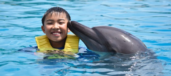 Why Swimming with Dolphins is a Life Experience for Children