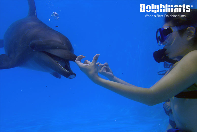 Interact with these amazing marine mammals underwater!