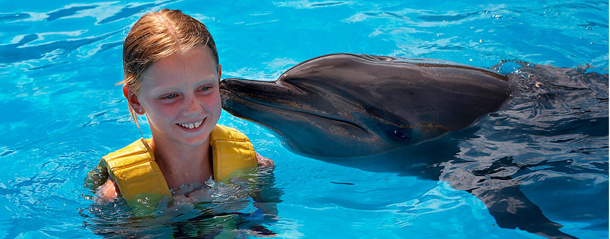 Swim With Dolphins In Barcelo Dolphinaris