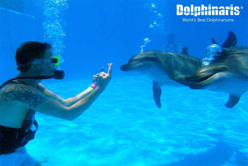 Become a dolphin trainer at Dolphinaris!