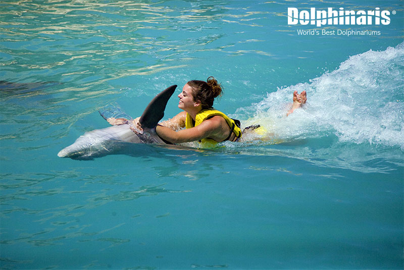 Swim with dolphins with the Belly Ride at Dolphinaris.
