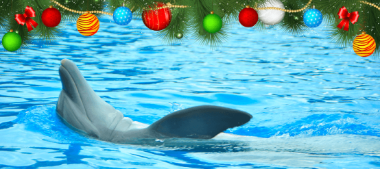 Discover how to celebrate Christmas with a dolphin theme