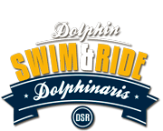 Dolphin Swim & Ride Program - The best dolphin experience