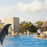 Dolphin interaction in Dolphinaris Cancun.