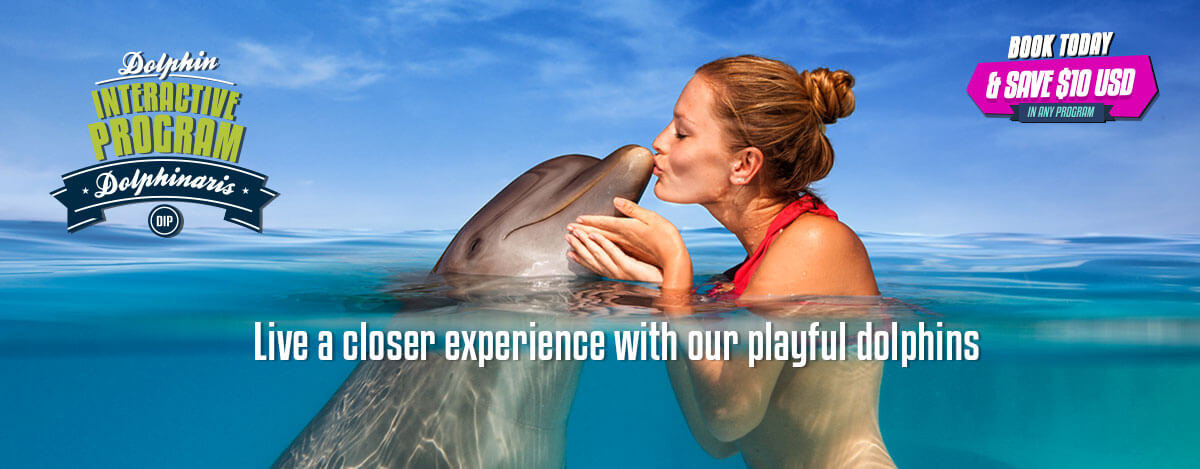 Dolphin Interactive Program - Cancun, Tulum, Barcelo and Cozumel.