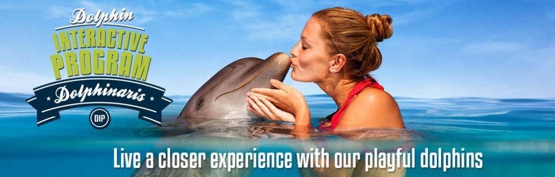 Dolphin Interactive Program