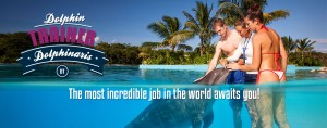 Swim with dolphins - Dolphin Trainer for a Day in Cozumel