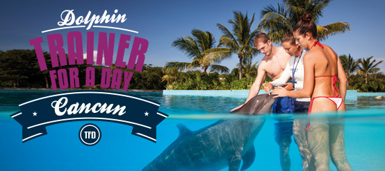 Dolphin Trainer For a Day program in Cancun plus unlimited meals and drinks.