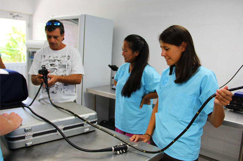 Dolphinaris AQUAVET®III Endoscopy