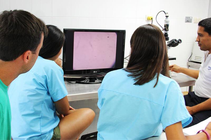 Dolphinaris AQUAVET III laboratorio clinico