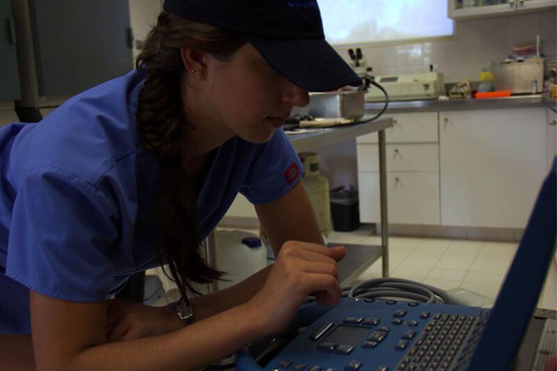 Dolphinaris AQUAVET III practicas estudiantes veterinaria