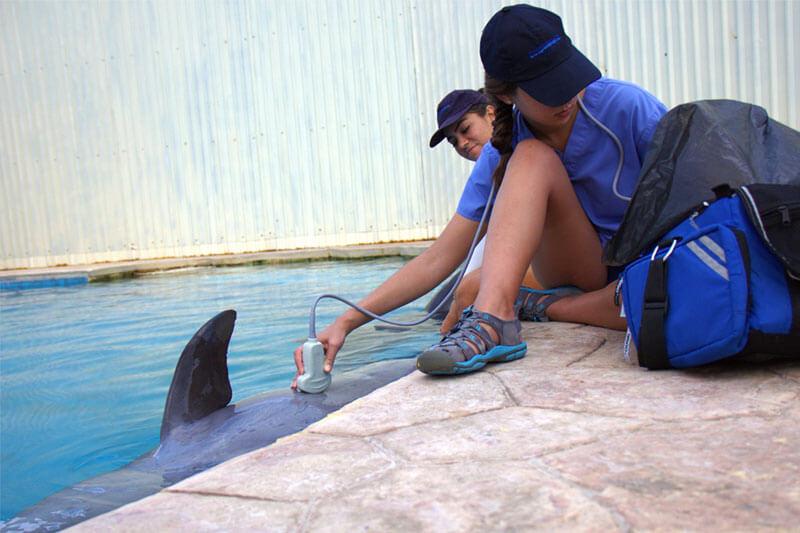 Dolphinaris AQUAVET III ultrasonografia Cancún