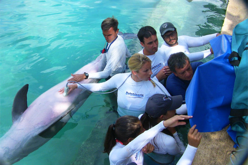 Dolphinaris AQUAVET®III Ultrasonography
