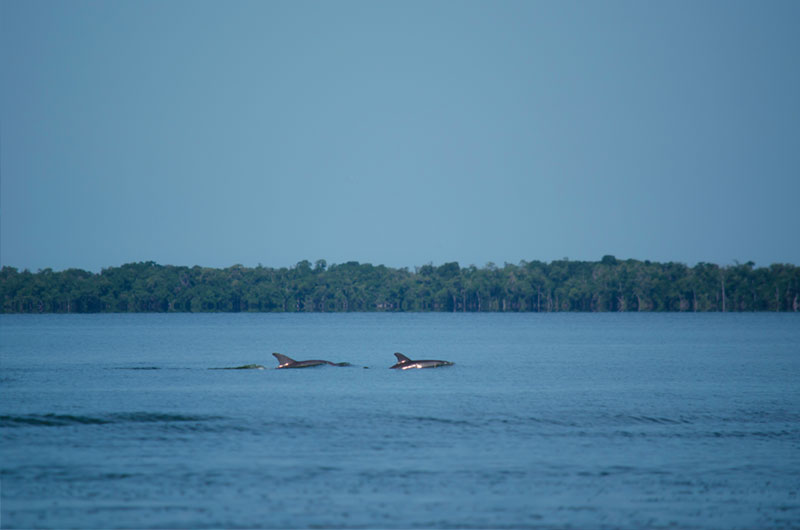 Dolphinaris foundation: Conservation in Terminos lagoon, bottlenose dolphins.