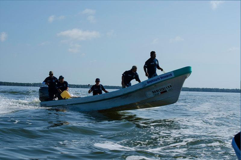 Dolphinaris foundation conservation Terminos lagoon Mexico