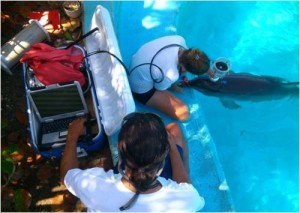 dolphinaris foundation research dolphins respiratory flow rates