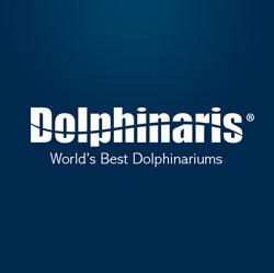 Niños y delfines: ¿Cuáles son los mejores programas para ellos?