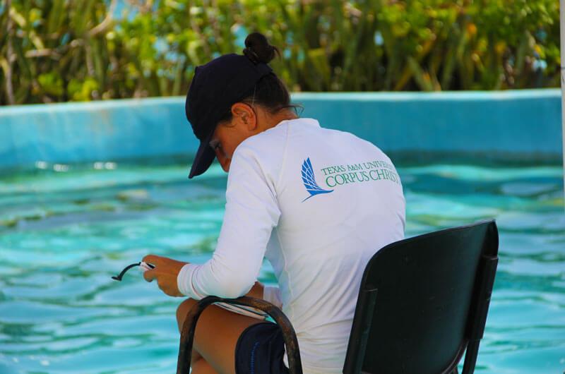 dolphinaris-universidad-texas-a-m-corpus-christi-programa-investigacion-cuidado-animal