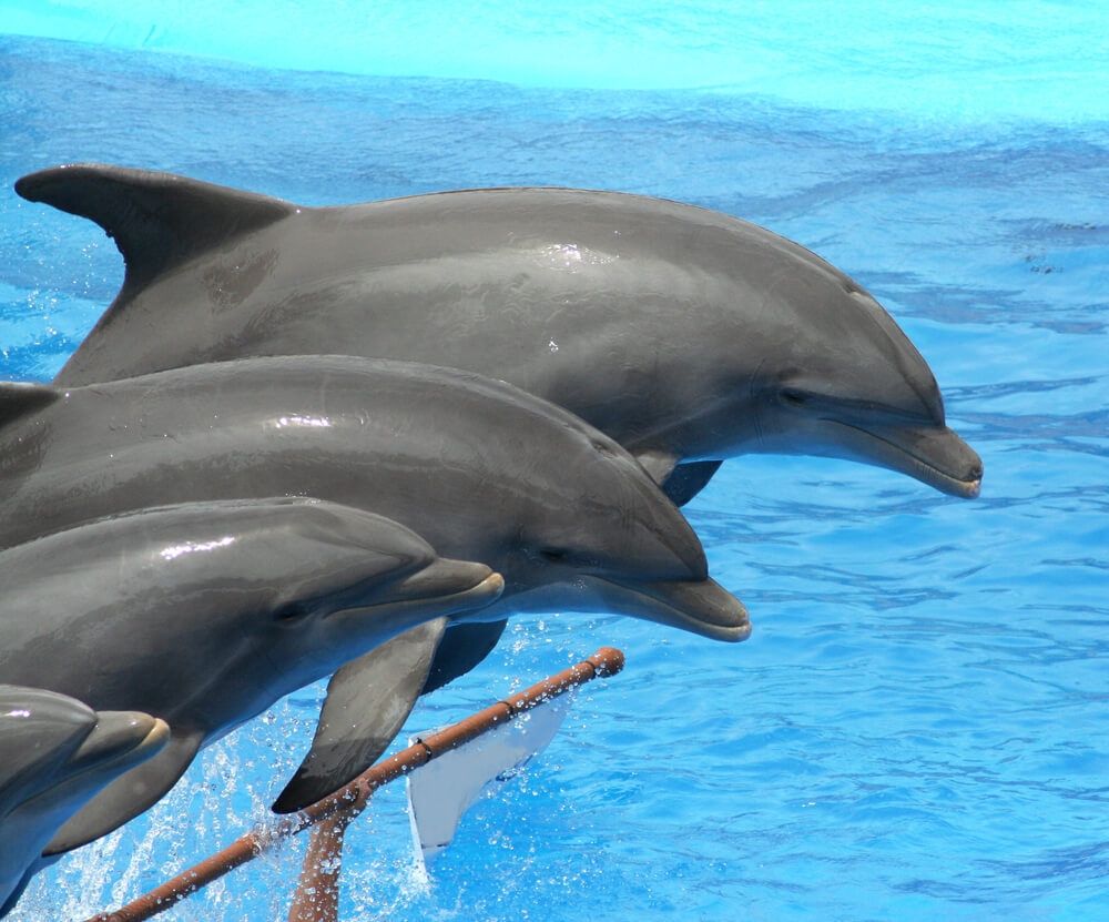 The Dolphin swim and other dolphin activities are great experiences.