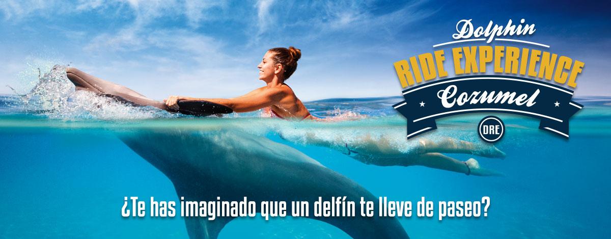 Experiencia de nado con delfines - Dolphin Swim Experience en Dolphinaris Cozumel.