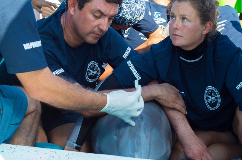 fundacion-dolphinaris-conservacion-evaluacion-salud-delfines-vida-silvestre