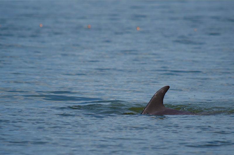 fundacion-dolphinaris-conservacion-laguna-terminos-delfin