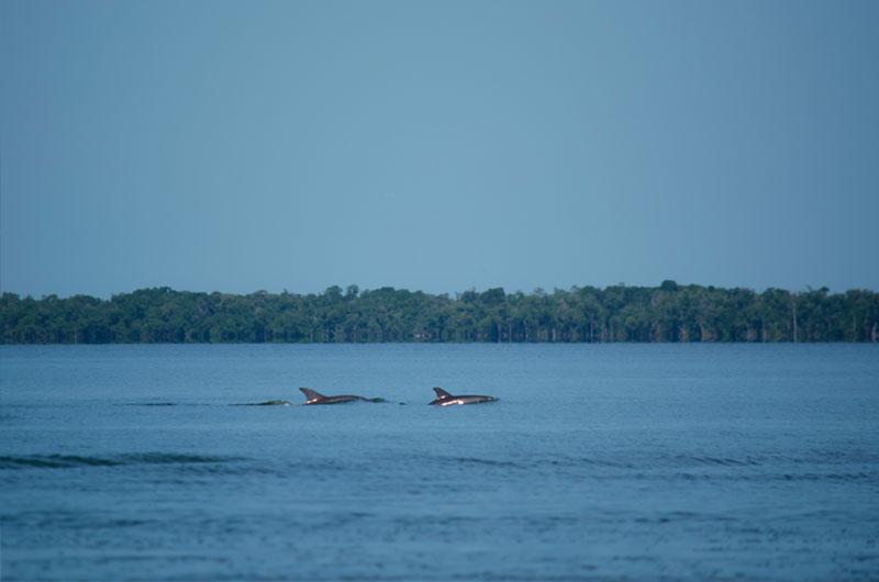 fundacion-dolphinaris-conservacion-laguna-terminos-delfines-nariz-botella