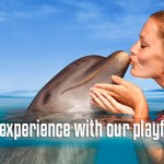 Interaction with Dolphins at Dolphinaris