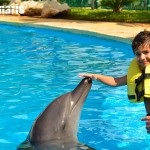 Kids love interacting with dolphins!