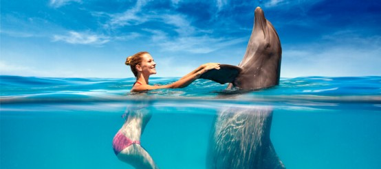 Make your dreams come true, swim with dolphins!