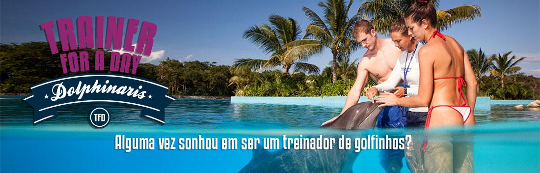 Nadar com golfinhos - Programa Treinador por um dia.