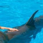 Nadar con delfines Barcelo Riviera Maya