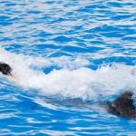 Nadar con delfines - Dolphin Swim Program - actividad empuje de pies.