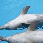 Nado com golfinhos desconto treinador golfinhos Cozumel emprego dos sonhos