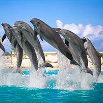 Golfinhos pulando, TripAdvisor comentários