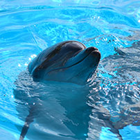 Delfín sonriendo, reseñas TripAdvisor
