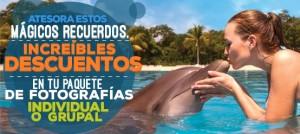 Promoción paquete de fotos de nado con delfines.