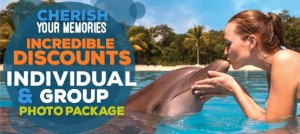 Photo package online deal swimming with dolphins