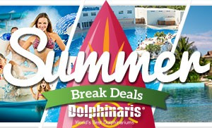 Summer Break Deals in swim with dolphins at Dolphinaris.